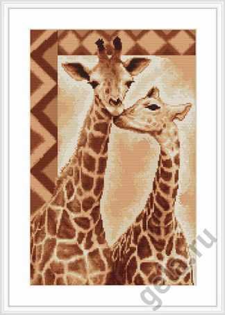B2216 Жирафы