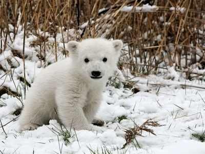 N-288 Белый медвежонок - мозаика Милато