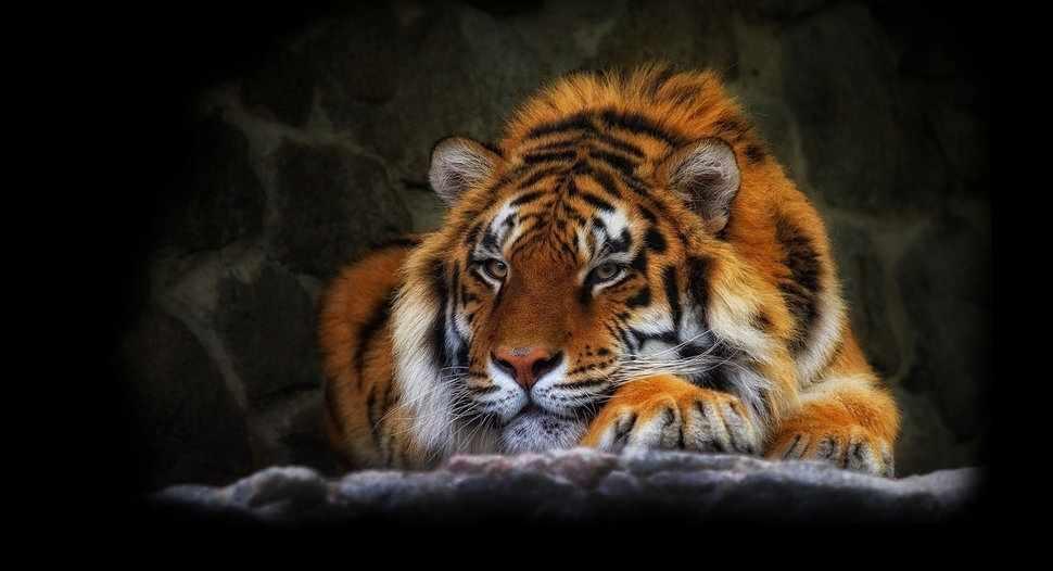 R-892 Тигр - мозаика Милато