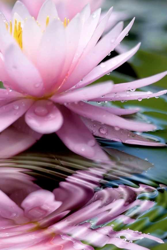 N-271 Священный цветок