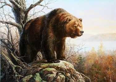 O-582 Медведь