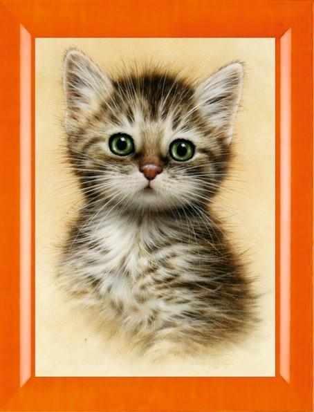 N-261  Портрет котёнка