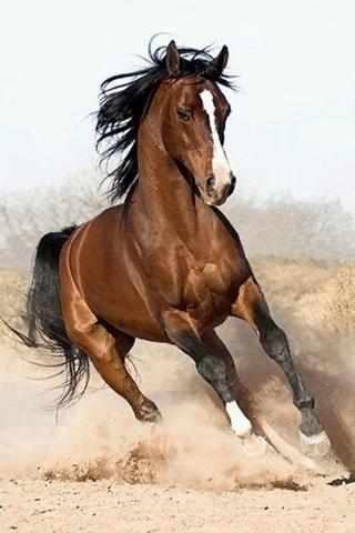 N-254 Дикий конь