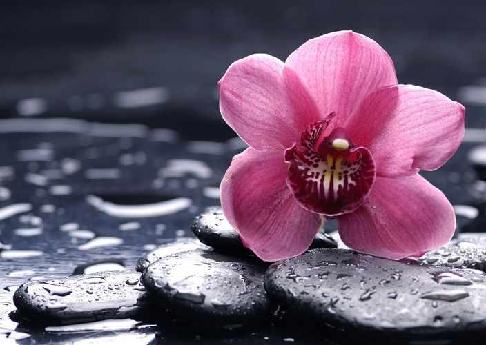 Алмазная вышивка Ag5848 - Орхидея Ванда - мозаика