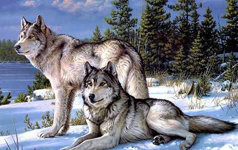 Алмазная вышивка Ag409 - Волки - мозаика