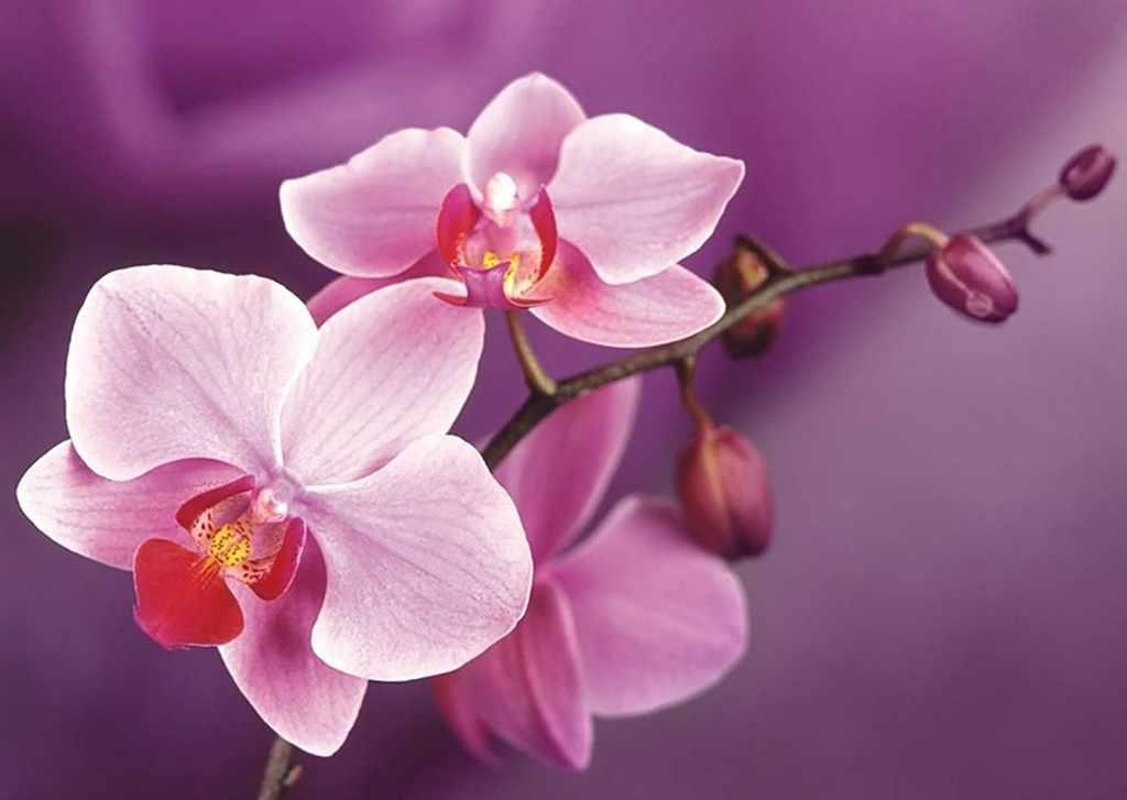 Алмазная вышивка Ag4634 - Ветвь орхидеи - мозаика