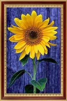 096 Солнечный цветок