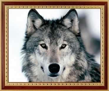 113 Серый волк