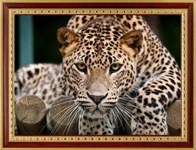 114 Леопард