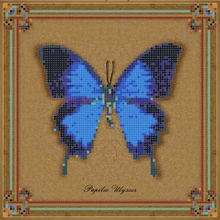 1Нбис-014арт коллекция бабочек - Papilio Ulysses - набор