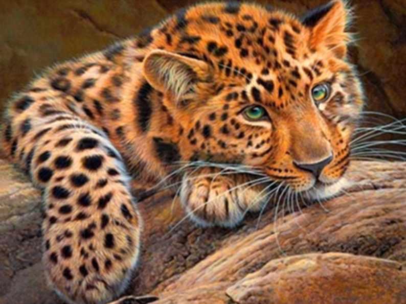 Алмазная вышивка Леопард (АЖ-1356) - картина стразами