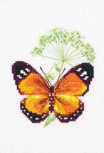 EH365 - Цветок тмина и бабочка