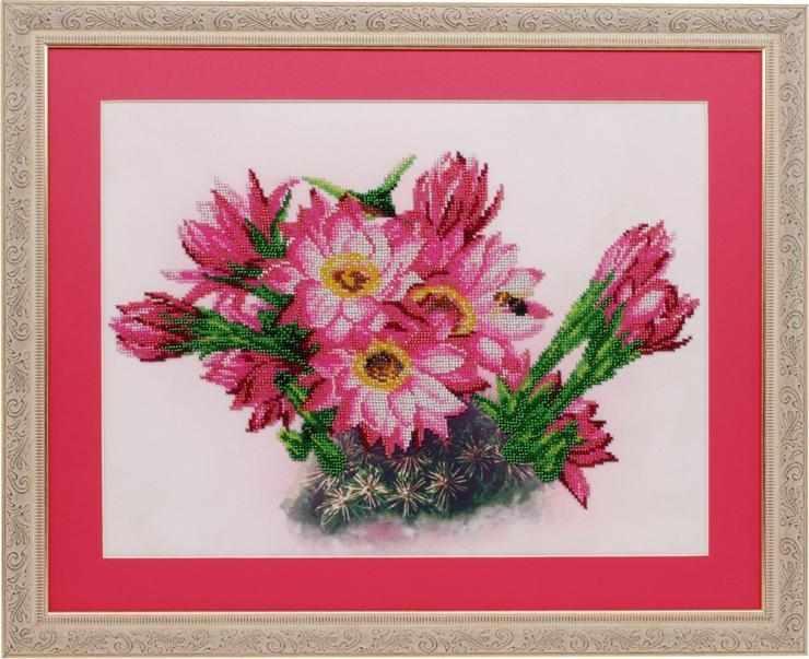 б0002 цветущий кактус
