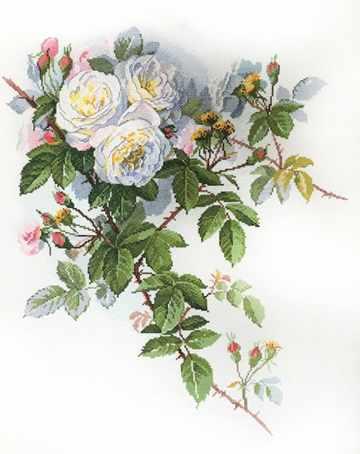 06.002.45 Белые розы