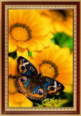 135  Бабочка на гацании