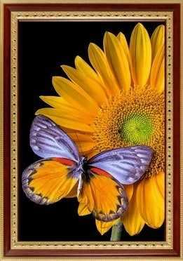 134  Бабочка на подсолнухе