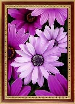 152  Фиолетовые герберы