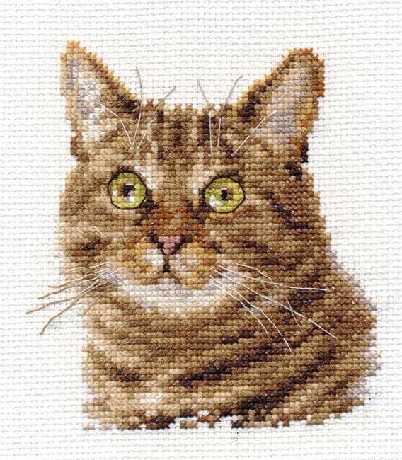 0-135 Европейский кот