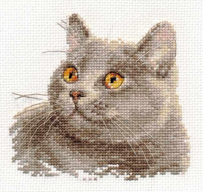 0-134 Британский кот