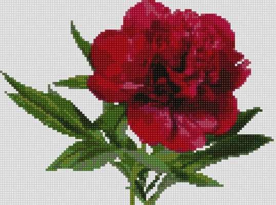50123 Красный пион - мозаика Anya