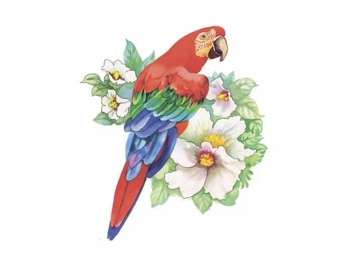 П9 Акварель попугай