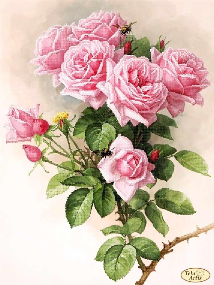 ТК-073 - Английские розы - схема для вышивания (Tela Artis)