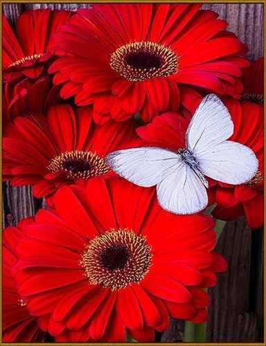 N-408 Бабочка - мозаика Милато