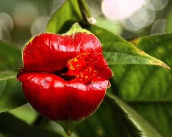 RA003 Цветочный поцелуй