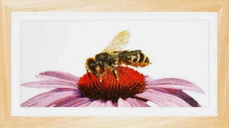 0549 Пчела на эхинацее