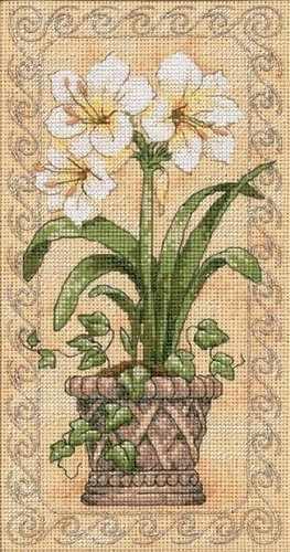 6912-DMS Амариллисы в цвету