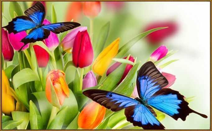 N-246 Бабочки в тюльпанах - мозаика Милато