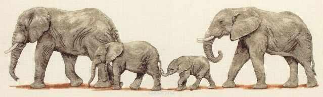 PCE0732 Поступь слонов