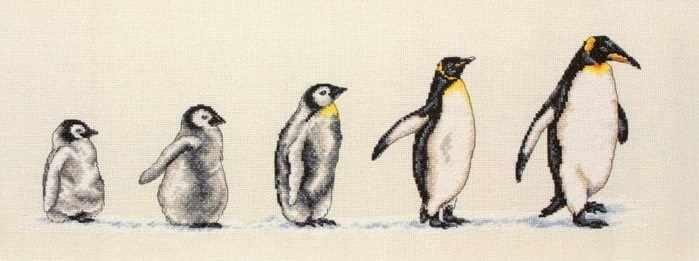 PCE0751 Пингвины в ряд