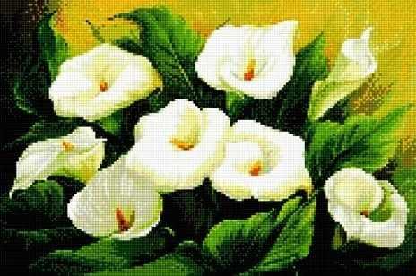 908711 Белые каллы