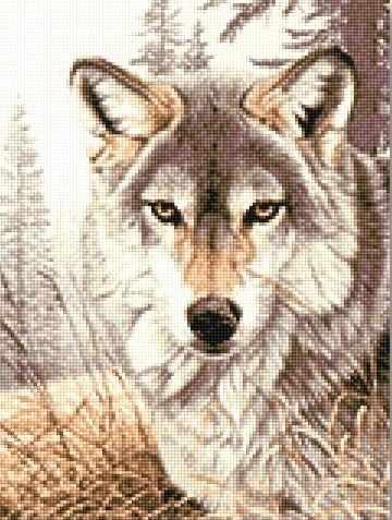 915911 Волк