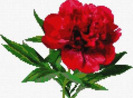50123 Красный пион