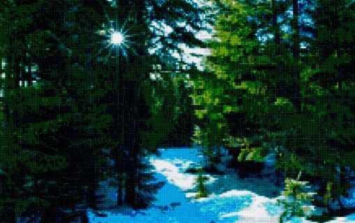 50157 Зимний лес