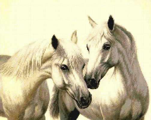 915402 Пара белых лошадей