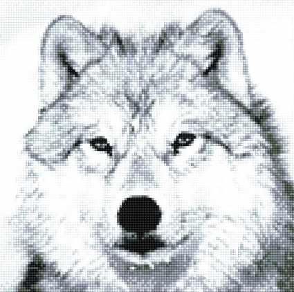 915901 Белый волк