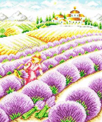 71033-11 Урожай лаванды