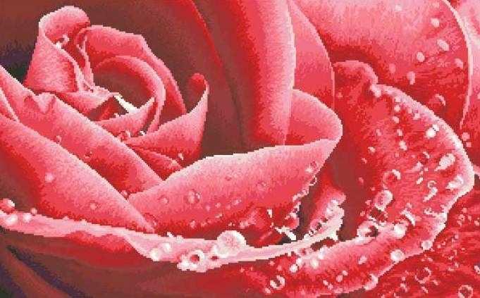 ЗПК-002 Красная роза