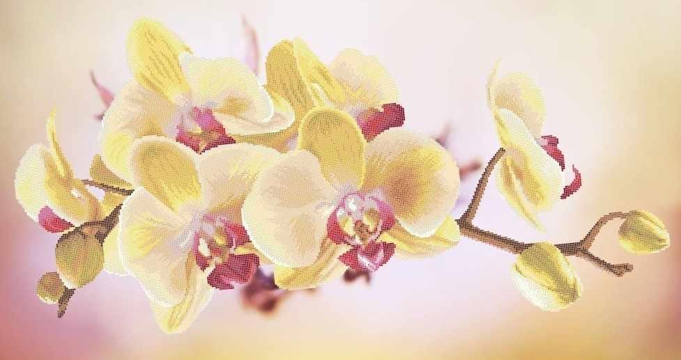 ЗПК-016 Орхидея - схема для вышивания (Золотая подкова)