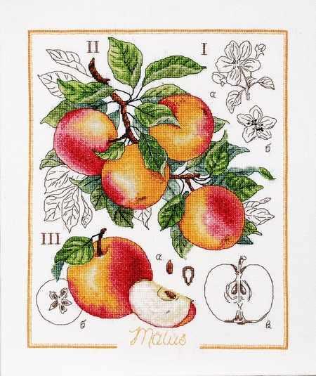 1261 Ботанический батл – Яблоко (Alisena)