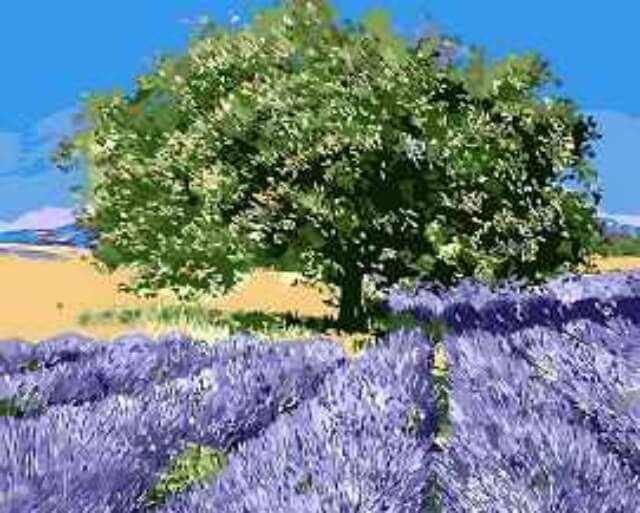 "Mg7628 ""Дерево на лавандовом поле"""