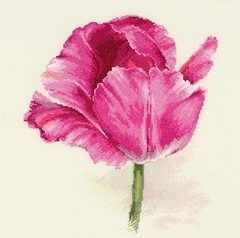 2-43 Тюльпаны. Малиновое сияние