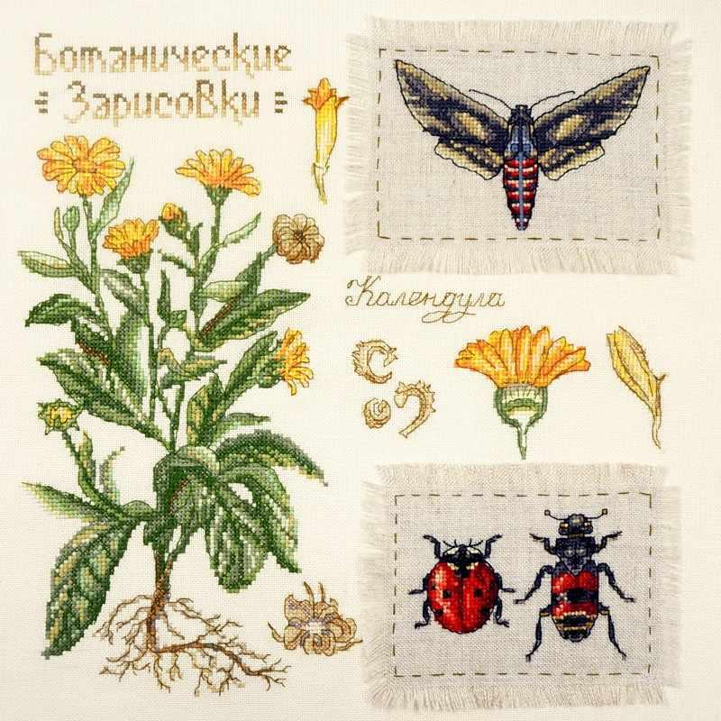 03.015.13 Ботаника:Календула