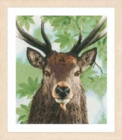 PN-0168208 Proud red deer (Lanarte)