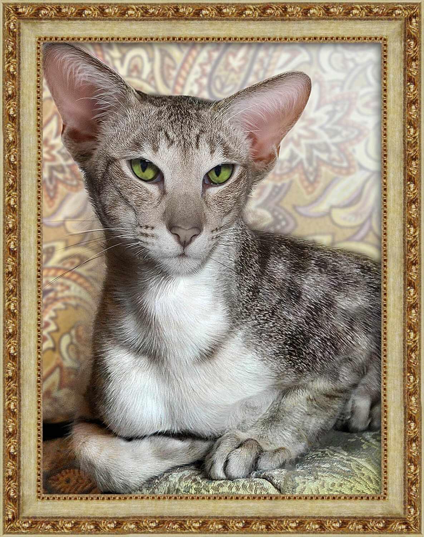 Алмазная вышивка Ориентальный кот (АЖ-1728) - картина стразами
