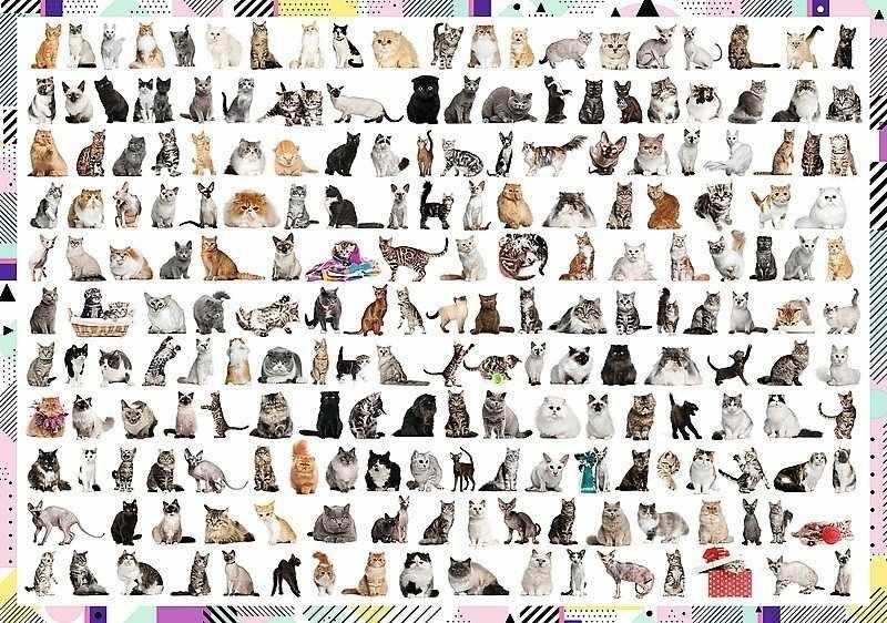 10498 208 кошек, 1000 деталей