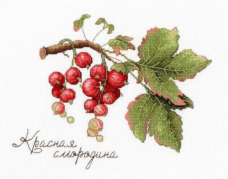 НВ-695 Дары природы. Красная смородина (МП Студия)